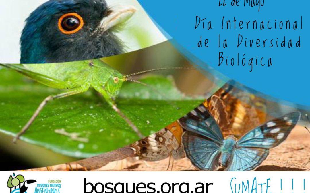 Día Internacional de la Diversidad Biológica - Bosques Nativos Argen
